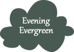 EveningEvergreen-NameCloud