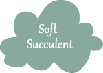 SoftSucculent-NameCloud